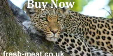 leopard-1a