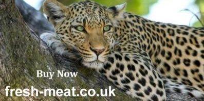 leopard-1e